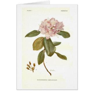 メリーE Eaton著シャクナゲのcarolinianum カード