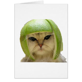 メロン猫 カード