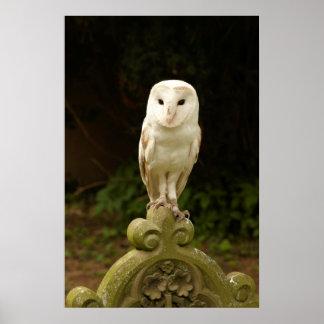 メンフクロウのプリント ポスター
