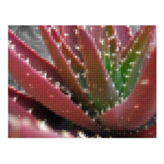 モザイク赤緑のアロエ ポストカード