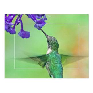 モナのラベンダーを持つハチドリ ポストカード