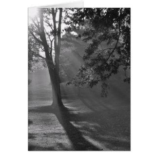 モノクロコレクションの霧深い森林 カード