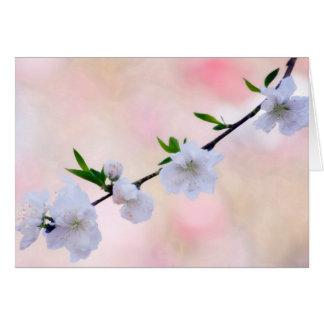 モモの花 グリーティングカード