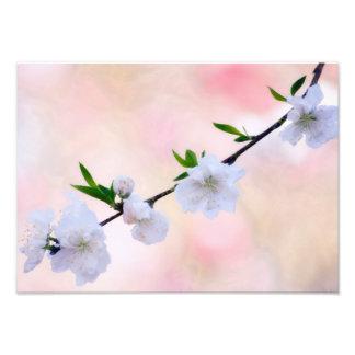 モモの花 フォトプリント