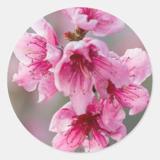 モモの花 ラウンドシール