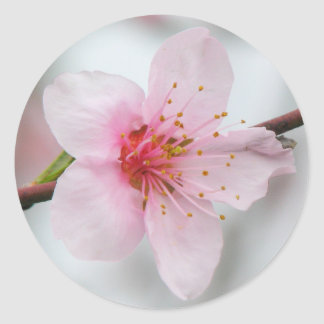 モモの開花 ラウンドシール
