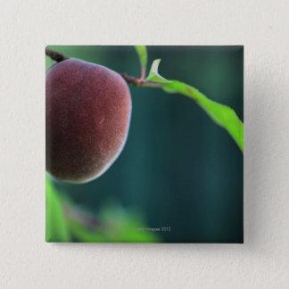 モモ木のモモ 缶バッジ