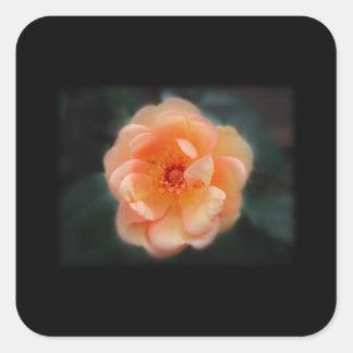 モモ-黒の黄色バラ、 スクエアシール