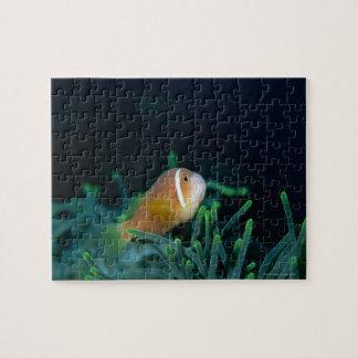 モルディブのアネモネ魚、モルディブの閉めて下さい ジグソーパズル