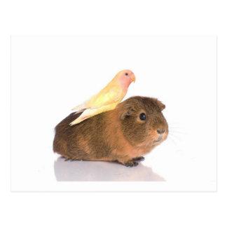モルモットおよび黄色い鳥 ポストカード