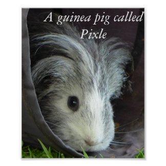 モルモットはPixleポスターを呼びました ポスター