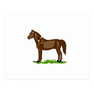 モーガンの馬 ポストカード
