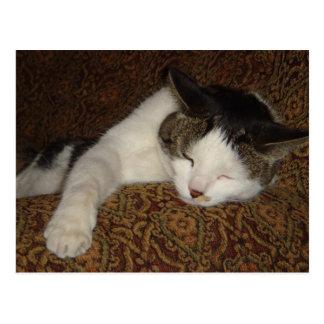 モーリー子猫 ポストカード
