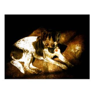 モーリー犬 ポストカード