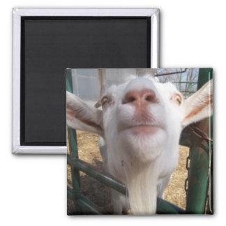 ヤギの顔 マグネット