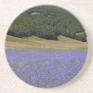 ヤグルマギクが付いている青のカラーフィールド・ペインティング コースター
