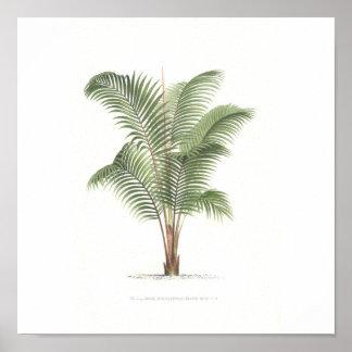 ヤシの木のイラストレーションのコレクション ポスター