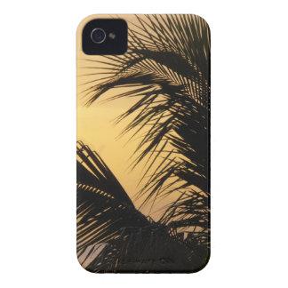 ヤシの木の日没のブラックベリーのはっきりしたな箱 Case-Mate iPhone 4 ケース