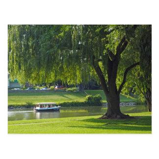 ヤナギの川190の空白のな郵便はがき ポストカード