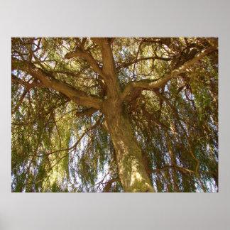 ヤナギの木 ポスター