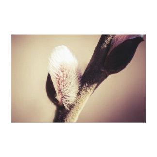 ヤナギの芽-新しい生命の推圧 キャンバスプリント