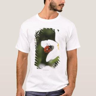 ヤブイチゲストックホルムスウェーデンのてんとう虫 Tシャツ