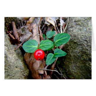 ヤマウズラの果実の野生の花 カード