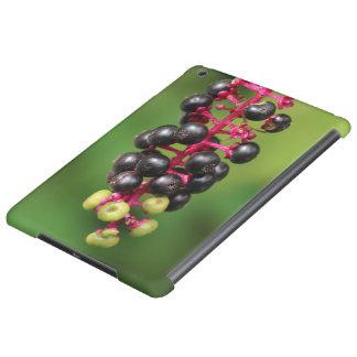 ヤマゴボウ属の果実