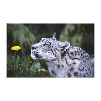 ユキヒョウのくんくんかぐ花のキャンバス キャンバスプリント