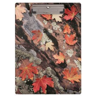 ユタのザイオン国立公園、秋のパターン クリップボード