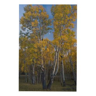 ユタ。 米国. 薄暗がりの《植物》アスペンの木そして月 ウッドウォールアート