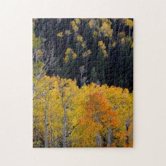 ユタ。 米国. Sevierの秋の《植物》アスペンの木 ジグソーパズル