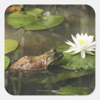 ユリの池のウシガエル スクエアシール