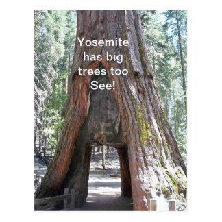 ヨセミテに大きい木の郵便はがきが余りにあります ポストカード