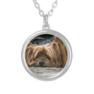 ヨークシャのかわいい子犬 シルバープレートネックレス