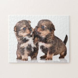 ヨークシャのかわいい子犬 ジグソーパズル