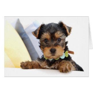 ヨークシャテリアの小犬の空白のなカード カード