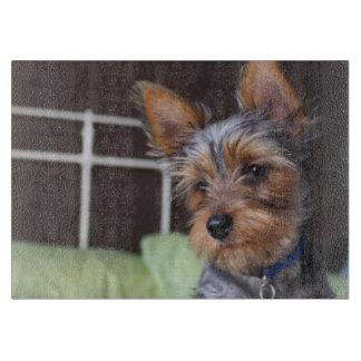 ヨークシャテリア犬のかわいいガラスまな板 カッティングボード
