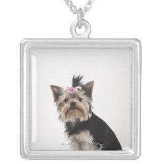 ヨークシャテリア犬のポートレート シルバープレートネックレス