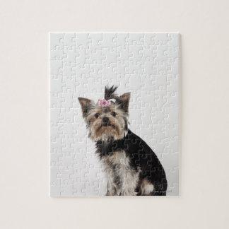 ヨークシャテリア犬のポートレート ジグソーパズル