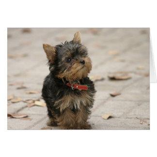 ヨークシャテリア犬の写真のブランクのカスタムなメッセージカード カード