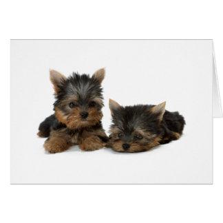 ヨークシャテリア犬の子犬のブランクのカスタムなメッセージカード カード