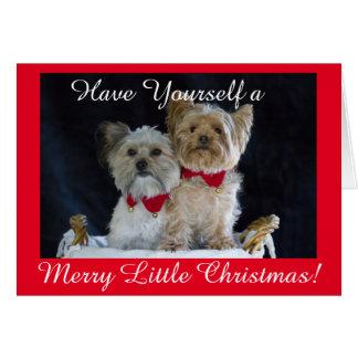 ヨークシャーテリアおよび友人の身に着けているクリスマスつば カード