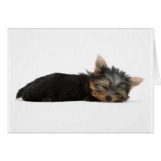 ヨークシャーテリアの子犬の睡眠 カード