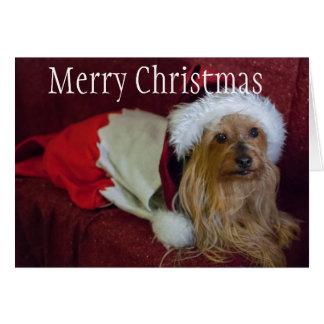 ヨークシャ(ヨークシャーテリア)/膚触りがよいテリアのクリスマスカード カード