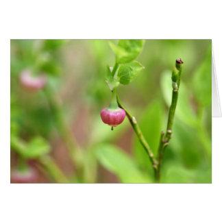 ヨーロッパのブルーベリー薮の花 カード