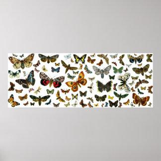 ヨーロッパの蝶コラージュ ポスター
