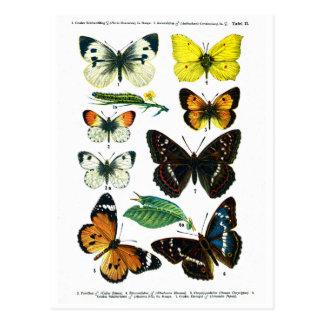 ヨーロッパの蝶プレートIIの郵便はがき ポストカード