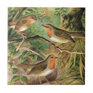 ヨーロッパ人のロビンのヴィンテージの鳥のイラストレーション タイル
