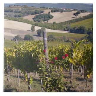 ヨーロッパ、イタリア、ウンブリア州、Montefalcoの近くで、ブドウ園 タイル